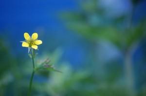 simple flower